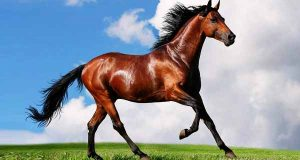 تعبیر خواب اسب ، تعبیر خواب اسب سواری با اسب رام شده و وحشی ، تعبیر خواب دیدن اسب سفید ، سیاه ، قهوه ای روشن و سرخ