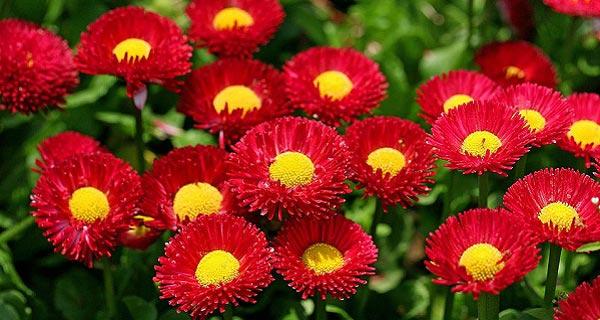 عکس نوشته گل برای پروفایل ، تصاویر گل زیبا و عاشقانه برای پروفایل ، عکس گل رز عشق برای پروفایل ، عکس گل نوشته دار ، aks-gol ، aks-profile-gol
