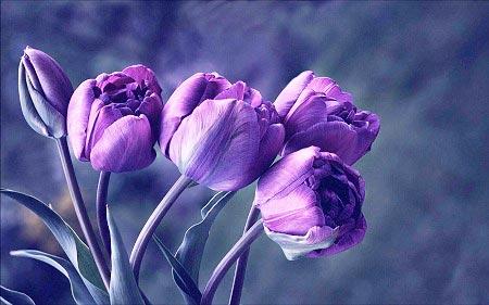عکس گل زیبا ، تصاویر گل های زیبا برای پروفایل