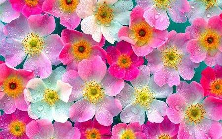 مجموع عکس گل های زیبا و دوست داشتنی دخترونه