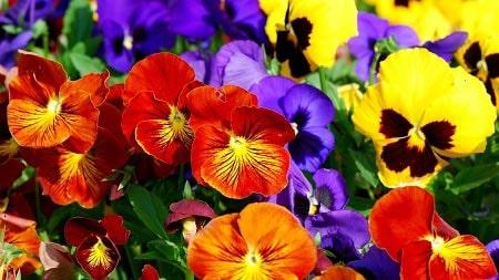 عکس پروفایل گل زرد ، آبی و قرمز زیبا و عاشقانه