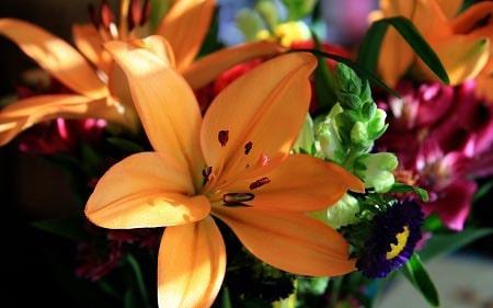 عکس پروفایل گل نارنجی زیبا