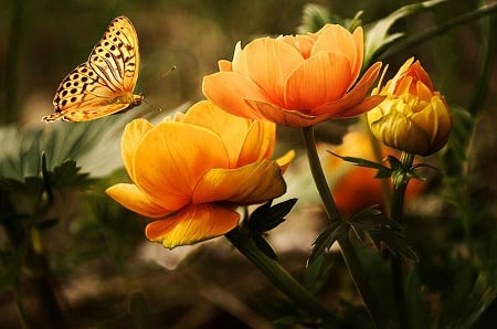 عکس گل نارنجی روشن و پروانه