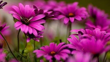 عکس گل زیبا مخصوص پروفایل