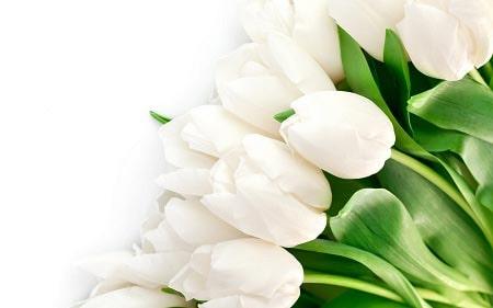 عکس گل سفید برای پروفایل ، تصاویر گل سفید ، عکس شاخه گل سفید