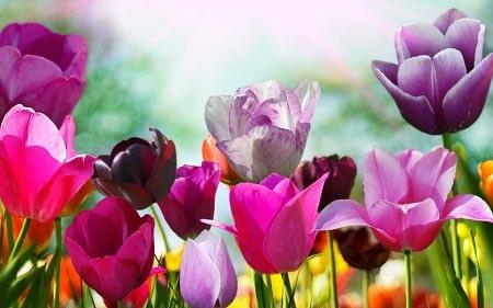 عکس گل های زیبا برای استفاده در آواتار و پروفایل