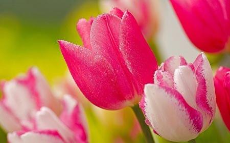 تصاویر گل های زیبا ، عکس گل های زیبا
