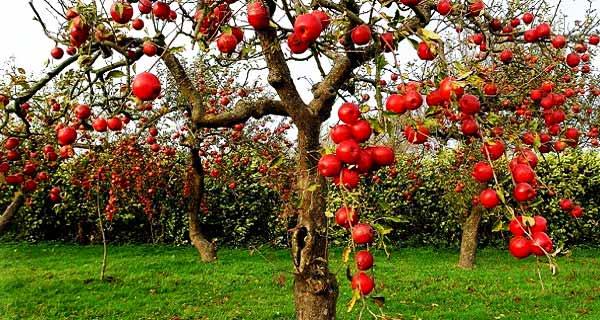 تعبیر دیدن باغ در خواب ، تعبیر خواب باغچه بزرگ و کوچک ، تعبیر خواب آبیاری و تعبیر خواب باغ میوه و انگور و باغ سبزیجات ، tabir-khab-bagh