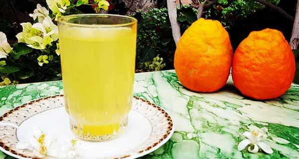شربت بهار نارنج ، طرز تهیه و درست کردن شربت بهار نارنج خانگی خوشمزه با گل و شکوفه بهار نارنج خشک شده در منزل، sharbat-bahar-narenj