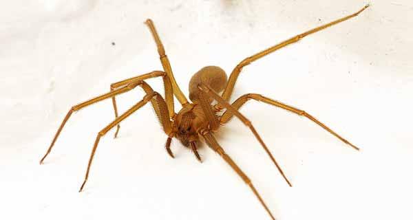 تعبیر خواب عنکبوت ، دیدن و کشتن عنکبوت بزرگ و کوچک سیاه،  قهوه ای، طوسی و قرمز در خواب از دیدن معبران