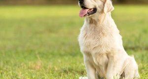 تعبیر خواب دیدن سگ مهربان و مظلوم و فقیر سفید و سیاه چه تعبیری دارد؟